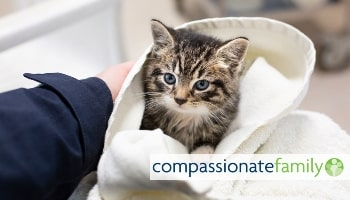 Compassionate Family starter activity © RSPCA